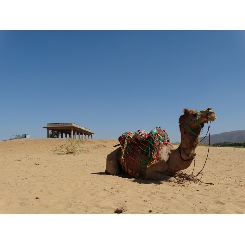 Pushkar is an Amazing Tourist Destination with Rich Heritage and Culture