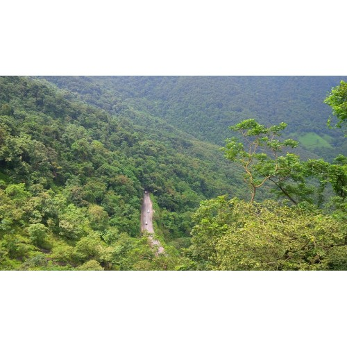 Discover Wayanad and its grandeur and vibrancy